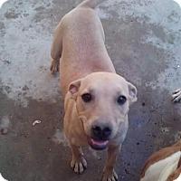 Adopt A Pet :: Kiara - San Diego, CA