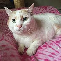 Adopt A Pet :: Landy - Addison, IL