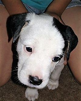 Terrier (Unknown Type, Medium) Mix Dog for adoption in Wichita Falls, Texas - Faith