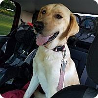 Adopt A Pet :: Mello - ST LOUIS, MO