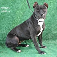 Adopt A Pet :: *NOODLE - Hanford, CA