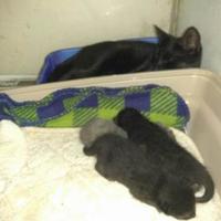 Adopt A Pet :: Felicia - Waxahachie, TX