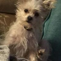 Adopt A Pet :: Consuela - Olathe, KS