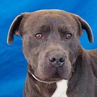 Adopt A Pet :: REX - Pasadena, CA
