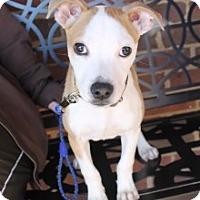 Adopt A Pet :: Blare - Charlotte, NC