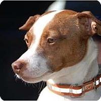 Adopt A Pet :: Arnie - Oklahoma City, OK