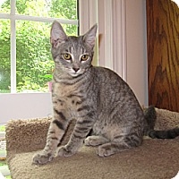 Adopt A Pet :: Angel - Harrisburg, NC