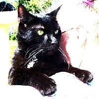 Adopt A Pet :: Binx - Cincinnati, OH