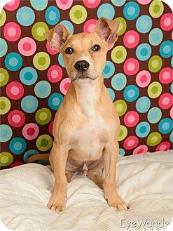 Terrier (Unknown Type, Medium) Mix Puppy for adoption in Baton Rouge, Louisiana - Duke