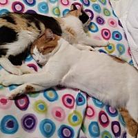 Adopt A Pet :: Marmalade - Rosamond, CA