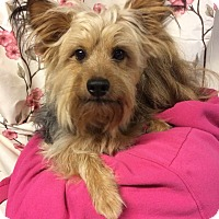 Adopt A Pet :: Bernie - Kansas city, MO