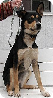 Rottweiler/Shepherd (Unknown Type) Mix Dog for adoption in Winfield, Pennsylvania - Tabitha