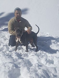 American Pit Bull Terrier/Mastiff Mix Dog for adoption in Wildomar, California - Titan