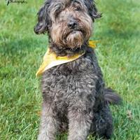 Adopt A Pet :: Murphy - Merriam, KS