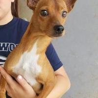 Adopt A Pet :: Dunwell - Tulsa, OK