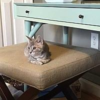 Adopt A Pet :: Winnie - Washington, DC