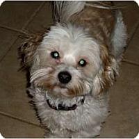 Adopt A Pet :: Bianca - Rigaud, QC