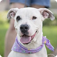 Adopt A Pet :: Spirit - Houston, TX