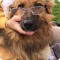 Adopt A Pet :: Elsa (medical hold, PA) - Madison, WI