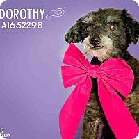 Adopt A Pet :: Dorothy - Creston, CA
