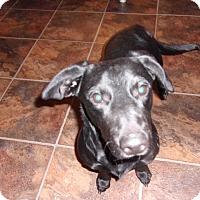 Adopt A Pet :: Cheeto - Arenas Valley, NM