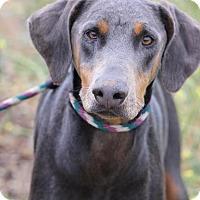 Adopt A Pet :: Charlie - Fillmore, CA