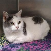Adopt A Pet :: Tia - Ashtabula, OH