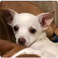 Adopt A Pet :: Tucker - San Angelo, TX