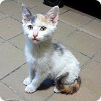 Adopt A Pet :: Hemi - Lathrop, CA
