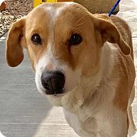 Adopt A Pet :: Feather - Las Vegas, NV