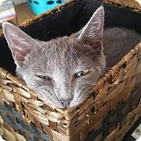 Adopt A Pet :: Razzle - North Highlands, CA