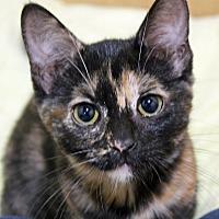 Adopt A Pet :: Kiwi - Troy, MI