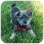 Photo 2 - Yorkie, Yorkshire Terrier Mix Dog for adoption in El Cajon, California - sparkles
