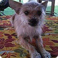 Adopt A Pet :: Toby - Morristown, TN