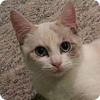 Adopt A Pet :: Becky - Portland, OR