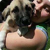Adopt A Pet :: Frank - South Jersey, NJ