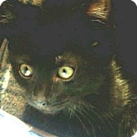 Adopt A Pet :: Perfect Charlene - Columbus, OH