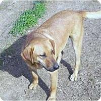 Adopt A Pet :: Eddie - Hayden, AL