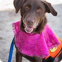 Adopt A Pet :: Jewel - Cumming, GA