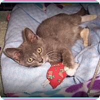 Adopt A Pet :: KONA - What a Kutie! - South Plainfield, NJ