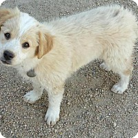 Adopt A Pet :: EMMI-Coming Soon! - Scottsdale, AZ