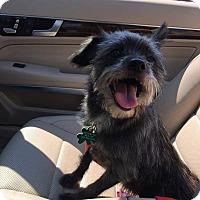Adopt A Pet :: Lola - Alpharetta, GA