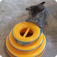 Adopt A Pet :: Nashville - Geneseo, IL