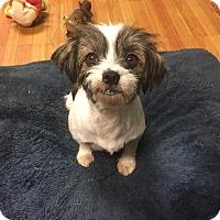 Adopt A Pet :: Mia - Washington, PA