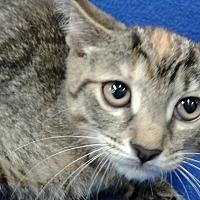 Adopt A Pet :: No Biting - Highland Park, NJ