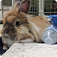 Adopt A Pet :: Dumpling - Oak Park, IL