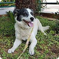 Adopt A Pet :: Nalia - Toronto, ON