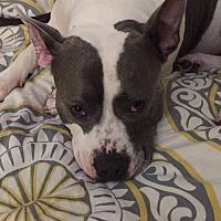 Adopt A Pet :: Feisty in Garner NC - Richmond, VA