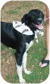 Border Collie Mix Dog for adoption in Foster, Rhode Island - Betsy