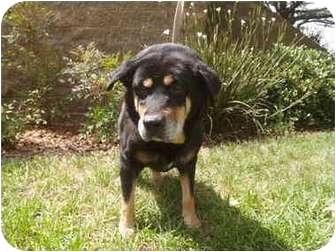 Spaniel (Unknown Type) Mix Dog for adoption in El Cajon, California - Bobby